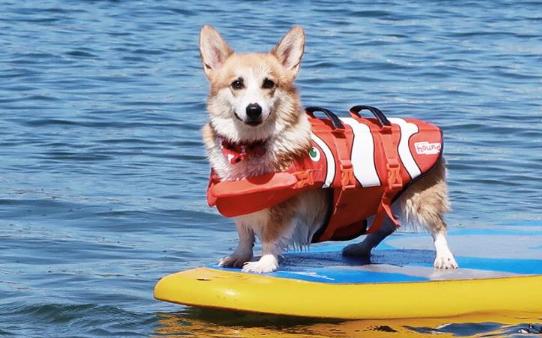 宠物狗对运动的需求有多大? 买狗前必看!